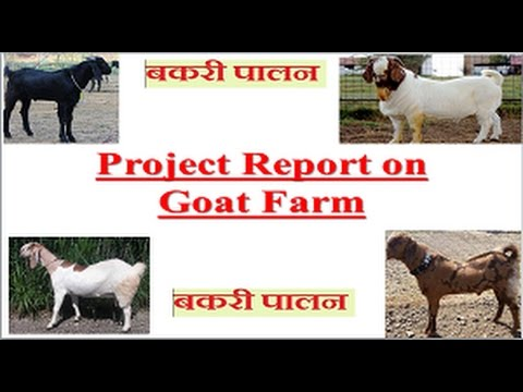 #goatfarming Goat Farm project report|| Profitable Agri Business Project  Report ||