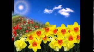 Flori de primavara Mp3