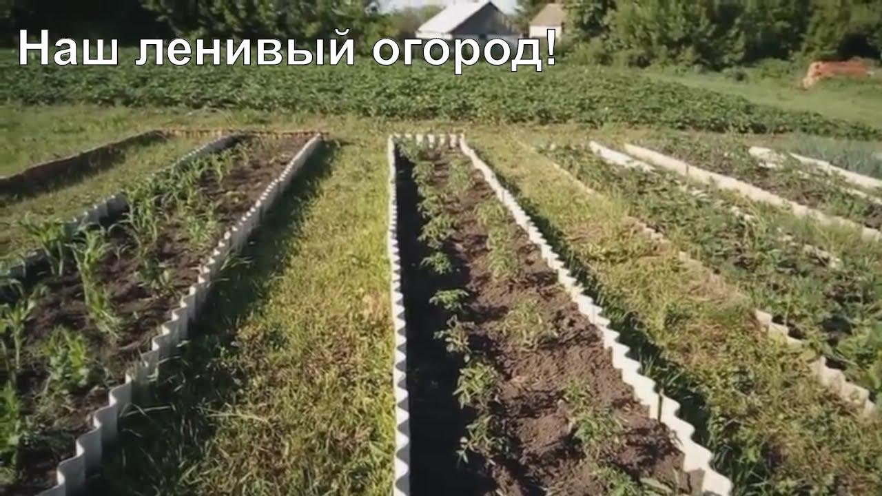 ленивый сад и огород своими руками фото
