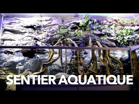 sentier aquatique aquarium sur mesure aqua art design youtube. Black Bedroom Furniture Sets. Home Design Ideas