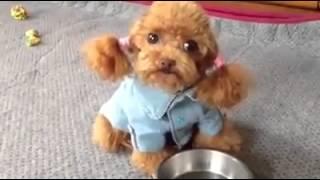 ตุ๊กตารุ่นนี้ใส่ถ่านกี่ก้อน !! น่ารักอะ