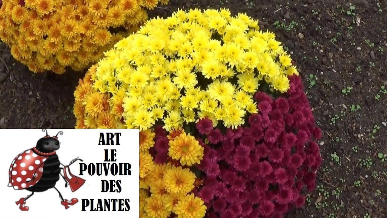 Chaine de jardin comment faire une bouture de for Plante annuelle