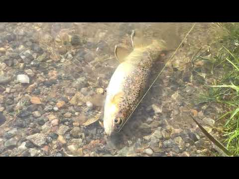Maggie's Pond Fishing Breckenridge Colorado