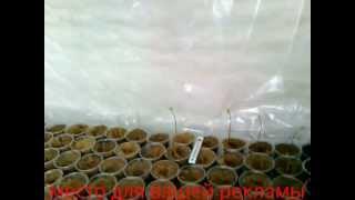 видео Как открыть бизнес по выращиванию саженцев