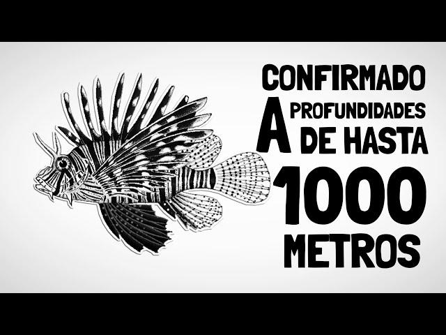 QUE ES UNPEZ LEON? (SPANISH)