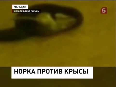 кино мафия россия криминал