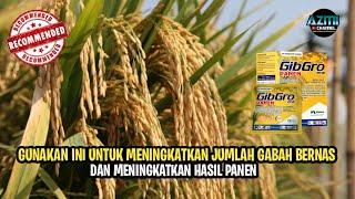 Download lagu GIBGRO PANEN - MENINGKATKAN JUMLAH GABAH BERNAS DAN MENINGKATKAN HASIL PANEN