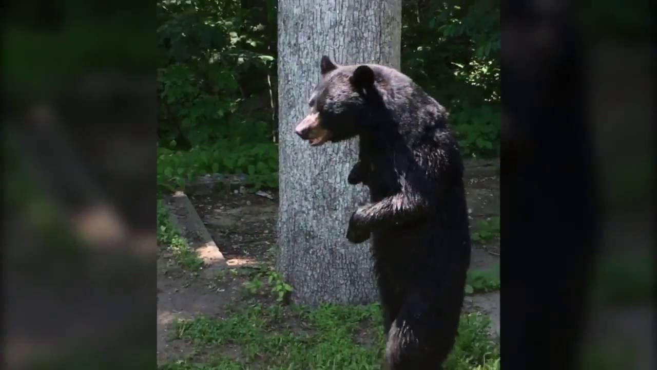 Yogi Bear во живо