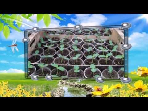 Купить теплицу в Харькове для выращивания рассады огурцов