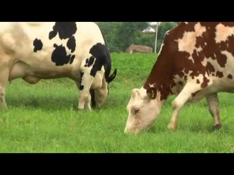 Wholly Cow Dairy Private Limited, Sohna