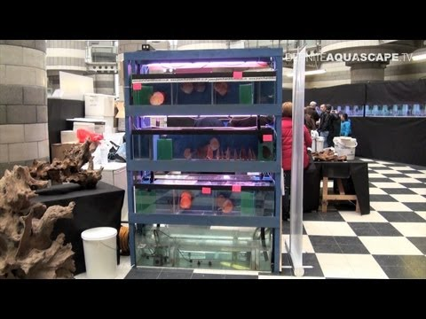 Closed Circulation Filtration System - The British Discus Show