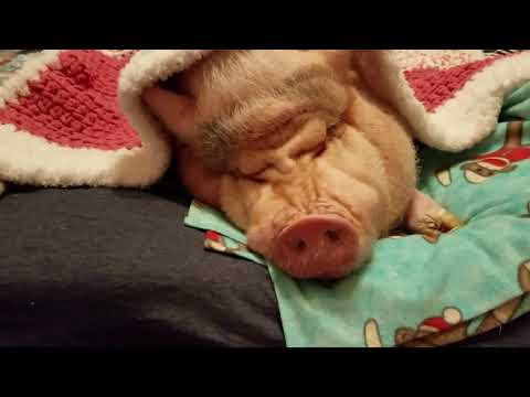 Sweet Dreams & Sleep With The Angels 😇 Be Kind To ALL Animals 💖