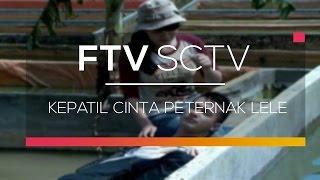 Video FTV SCTV - Kepatil Cinta Peternak Lele download MP3, 3GP, MP4, WEBM, AVI, FLV November 2019