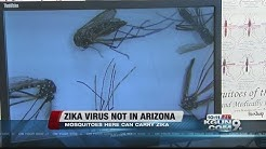 Mosquitos in Southern Arizona can carry Zika