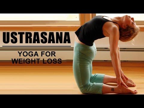 ustrasana the camel pose  yoga for weight loss  youtube