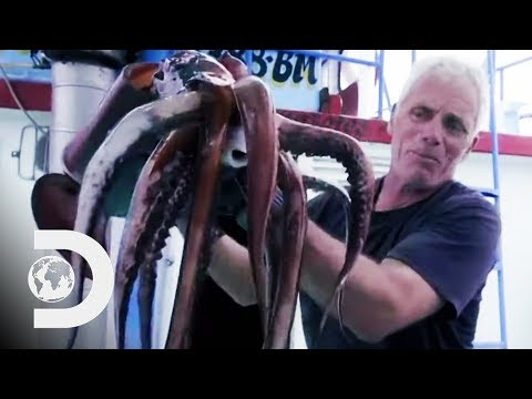 Fishing For Deadly Humboldt Squid Off The Coast Of Peru | River Monsters