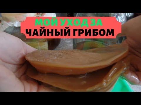 Чайный гриб болеет как вылечить фото