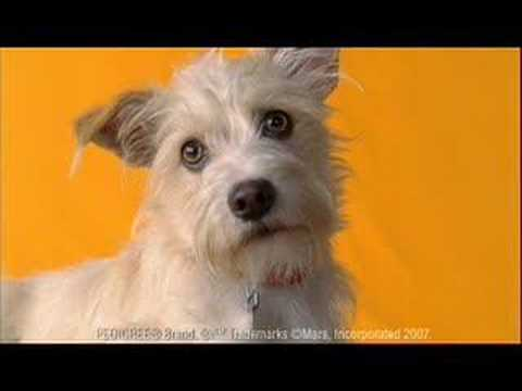 Dog Breed Pedigree Commercial