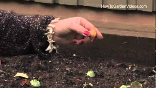 How to Plant Dutch Iris Bulbs