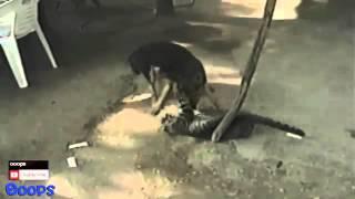 Смешные бои животных
