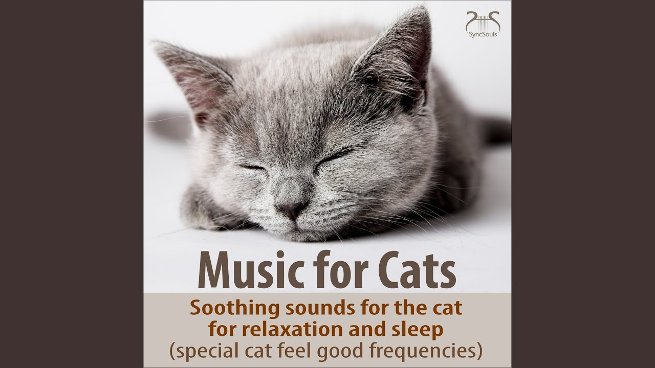 Relaxing Music for the Cat: Gentle Piano Sounds and Soothing Cat Purring  (Extra Frequency Range