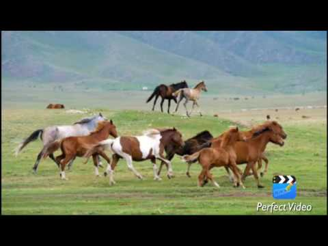 Моя Родина - Казахстан