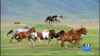 Моя Родина Казахстан