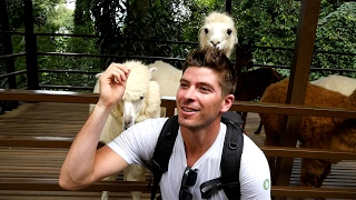 Feeding alpacas - Kuala Lumpur city tour
