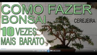 Bonsai Avaré - Cerejeira (Parte 1)