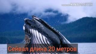 Топ-10 самых больших китов