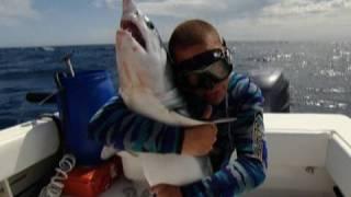 Mako Shark Sample