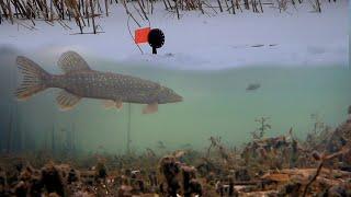 ЧТО ТАМ ТВОРИТСЯ Ловля Щуки и Окуня на Жерлицы Подводная съемка