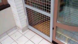 Сетки на окна антикот :: newvideoblog.
