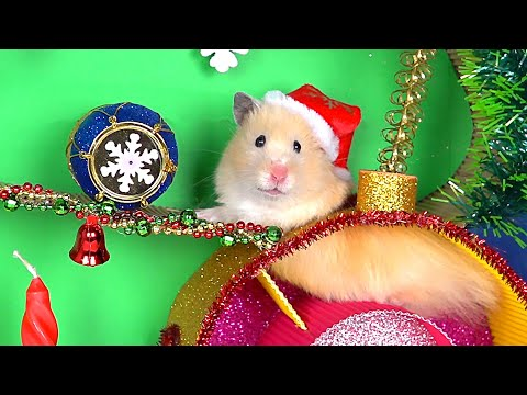 Christmas Tree Maze and Present for Funny Hamster