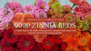 ZINNIAS: FULL TOUR // What Zinnias Are You Growing This Year? Flower Harvest- Benary&39;s Giant Zinnias