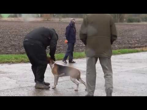 Hunt Supporter Shows Just How Much He Loves Animals // Easton Harriers, 1 December 2018