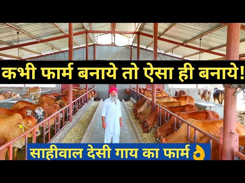 Popular Sahiwal Desi cow Dairy farm in india   How to Start?  Shed Design