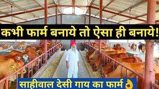 देसी गाय पालन करने से पहले अंत तक देखें|Popular Sahiwal Desi cow Dairy farm in india