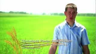 Защита озимой пшеницы в весенний период