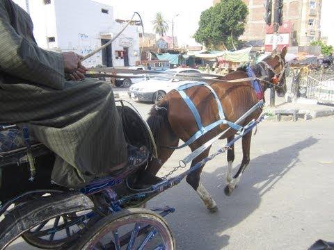 Tour De Calèche à Louxor, Egypte ( Full HD )