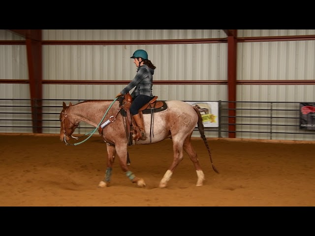 Daily Dose of Horsemanship Homework: 3 Step Circle