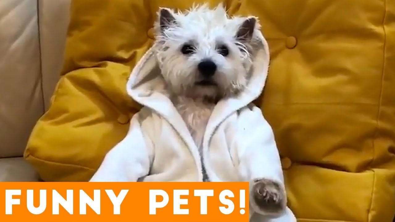 Cutest Pets Animals Of The Week Compilation August  Funny Pet Videos
