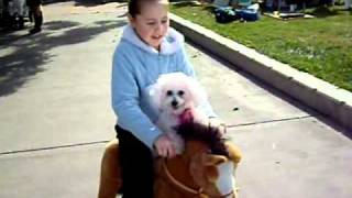 Toy Horse, Walking Horse, Toy Horse Manufacturer, Amusement Rides
