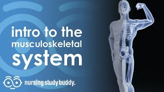 Intro to the Musculoskeletal System - Nursing Study Buddy Video Library