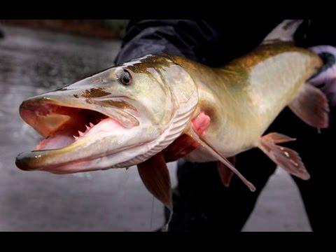 Best Muskie Lake WI -TEAL LAKE  (Tube Angler)