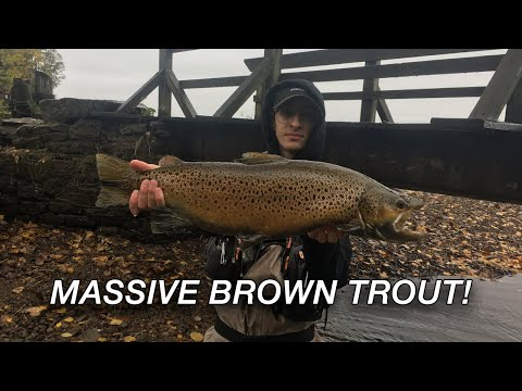 BROWN TROUT FISHING IN MUDDY CREEK WATER // Lake Ontario Tributaries