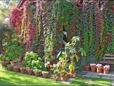 Вопрос: Чтобы дом был полон любви, какие растения посадить в саду?
