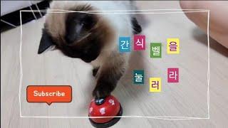 고양이 간식벨 훈련 |…