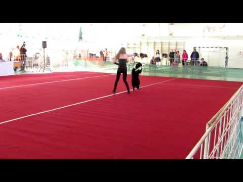 Caesar ~ Border Collie | 2016 - Dog Dancing Hungarian Open