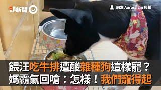 餵米克斯犬吃牛排遭酸:雜種狗這樣寵? 媽回嗆:我們寵得起|寵物|毛小孩